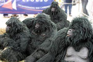 The Gorillas in Cardiff - yn Bae Caerdydd